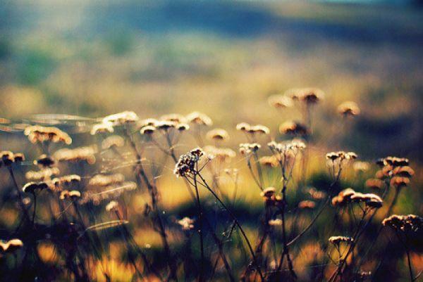 真爱的情,甘愿守着孤独;痴心的爱,即便成伤也无怨无悔