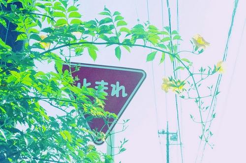 不错的句子,回忆本来是非常美好的,只要你能让过去的都过去。
