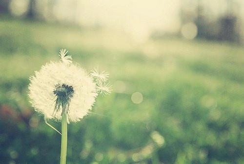 我们的爱,就像来不及许愿的流星,再怎么美丽,也只能是曾经。