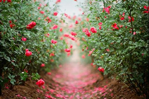 千万不要对任何事感到后悔,因为它曾经一度就是你想要的。后悔没用,要么忘记,要么努力。